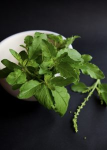 Holy Basil for dogs