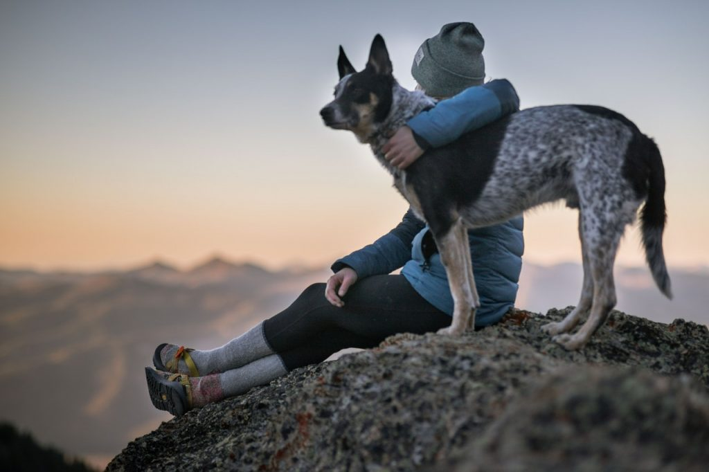 calm dog and owner relaxing