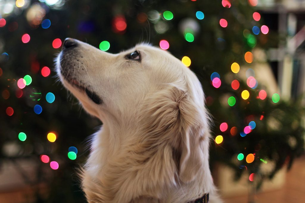 Christmas gifts for dogs under tree
