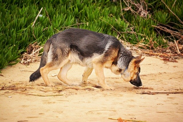 dog sniffing by DanaTentis