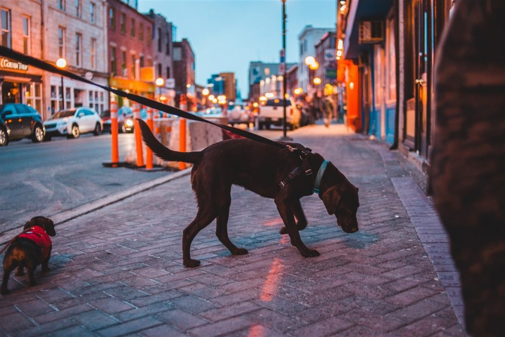 walking the dog in the city