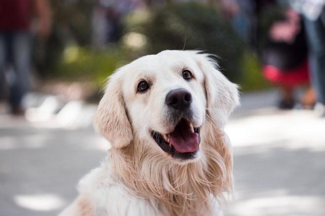 smiling happy dog