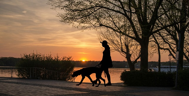 Intentional dog wak at sunset
