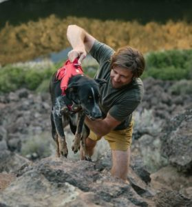 Ruffwear webmaster harness on hiking dog