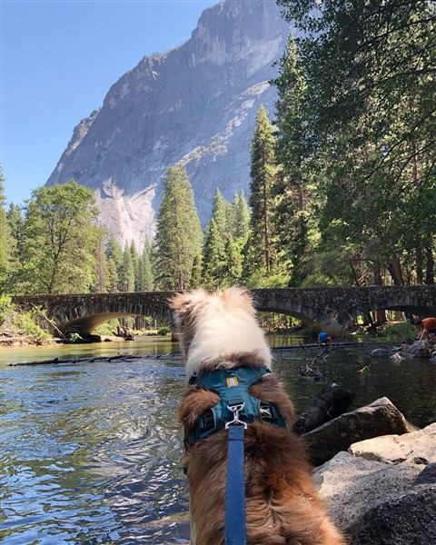 dog traveling in ruffwear front range harness