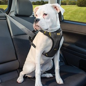 Kurgo Impact Harness on dog
