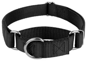 dog martingale collar