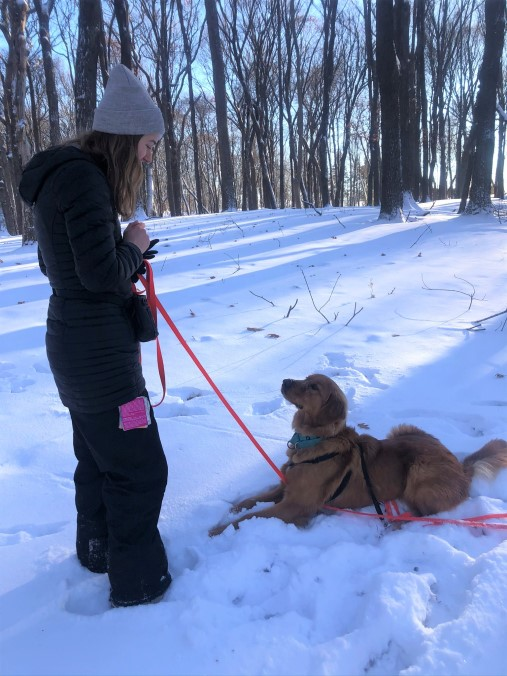 training on dog decompression walks