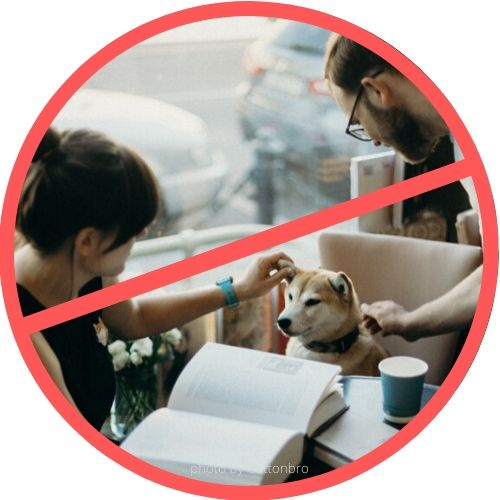 dog in coffee shop showing bad example of how to help a rescue dog adjust