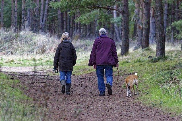 dog decompression walks in woods
