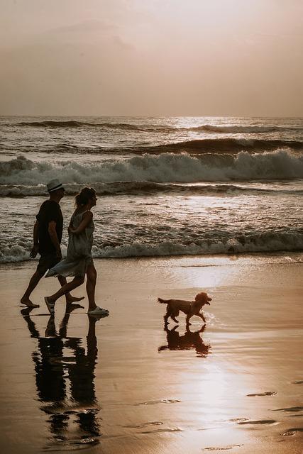 dog decompression walks on beach