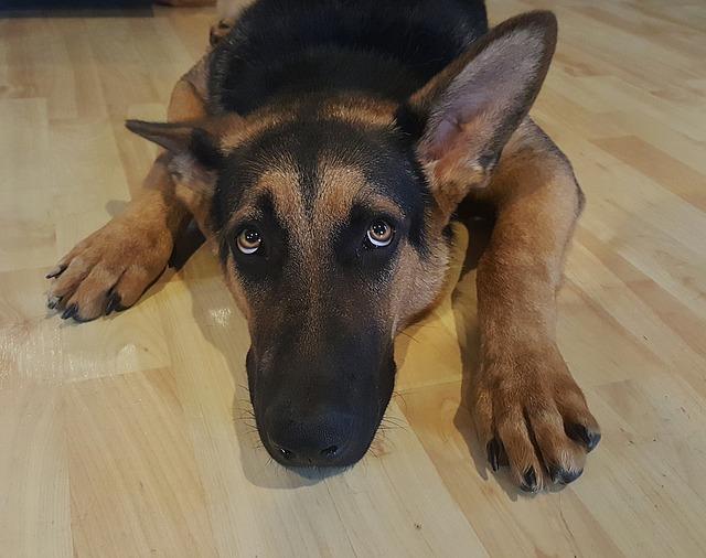 stressed dog that didn't get a dog decompression walks