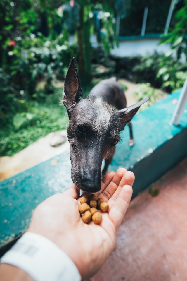 positive reinforcement by rewarding rescue dog with food