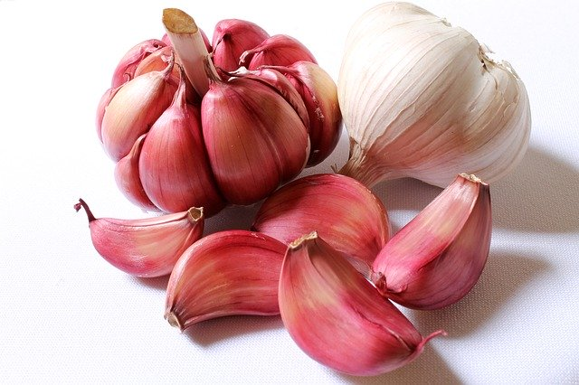 Garlic as a natural remedy for worms in dogs