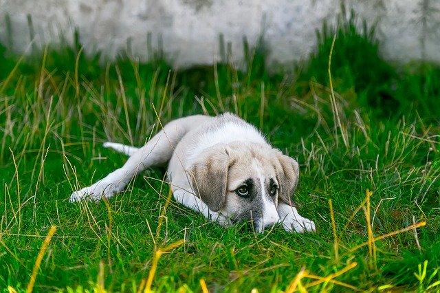 dog showing symptoms of worms in dogs by Isa KARAKUS